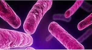 bacterias organismo